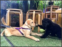 pet friendly cafe mt gravatt